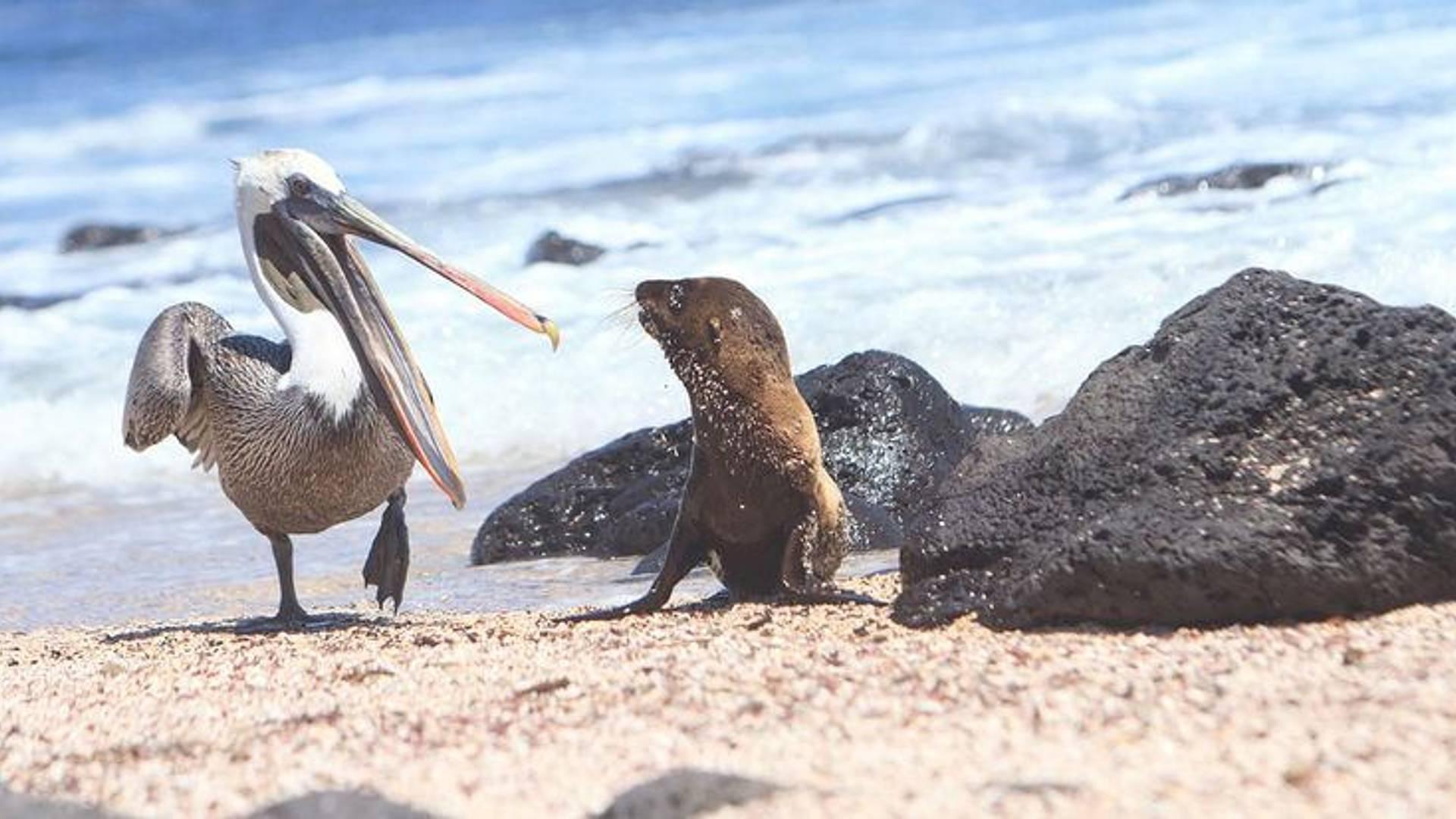 Exploration de l'archipel des Galapagos
