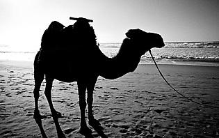 Fiche pratique du Maroc