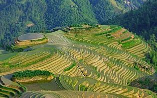 Rizières Thaïlande