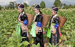 Hmong d'Asie
