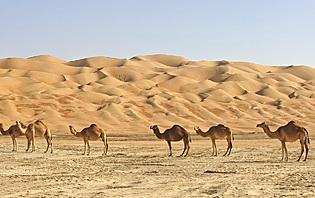 Atouts du Sultanat d'Oman