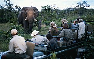 Prévoir son rythme safari