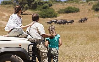 Safari, une destination pour vous ?