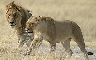 Voyager au féminin en Namibie