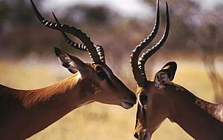Safari en liberté