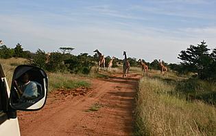 Namibie en liberté