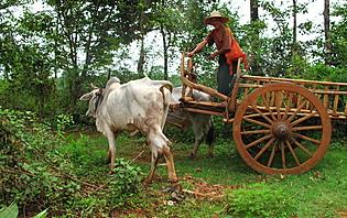Chauffeur Birmanie