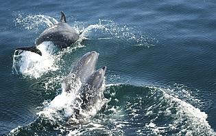 Les dauphins de Xel-Ha