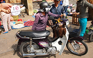 Échappez vous dans les rues du Vietnam en Scooter