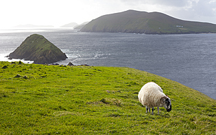 Météo Irlande
