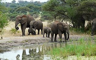 Lors de la saison sèche, les animaux se regroupent près des points d'eau!