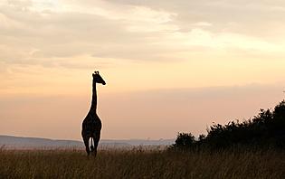 Parmi les 16 parcs et les 5 réserves de Tanzanie, vous trouverez forcément votre bonheur!