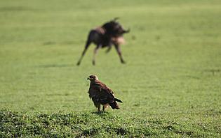Selous Game Reserve, un territoire riche en gibier!