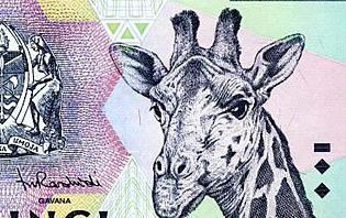 Même les billets Tanzaniens donnent envi de partir en Safari !