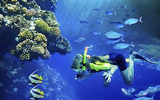 N'hésitez pas à plonger dans les eaux bleues des îles de Derawan et Sipadan
