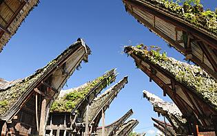 Les maisons traditionnelles du peuple Toraja, en forme de corne de buffle !