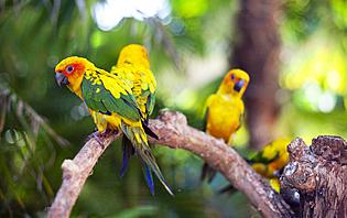 Laissez-vous émerveiller par la faune et la flore de l'île de Java
