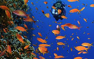 Plongez aux milieux de poissons multicolores en Indonésie !