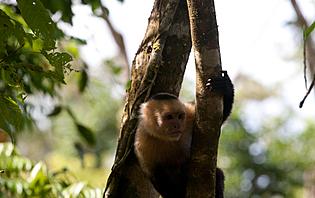 Attention dans la forêt tropicale