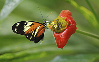 Mindo, pour les touristes amoureux de faune et de flore luxuriantes et préservées !
