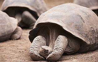 Allez à la rencontre des tortues géantes des îles Galapagos