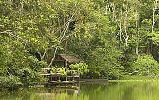 La forêt Amazonienne, un challenge pour tous les aventuriers