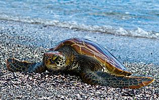 Profitez des plages sauvages de Los Frailes et de ses habitants lors de votre passage