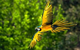 La biodiversité du parc de Yasuni est riche et colorée !