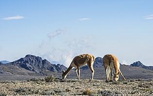 Le Volcan Chimborazo et ses alentours vous charmeront