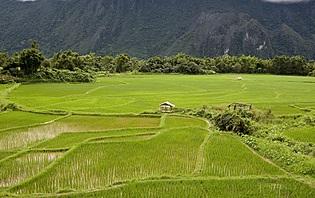 Rizières au Laos