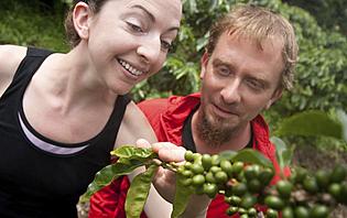 Découvrez les plantes de café du Guatemala !