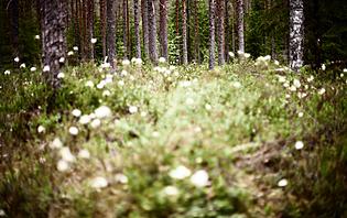La nature sauvage estonienne vous enchantera !