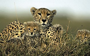 Les animaux du parc Nakuru