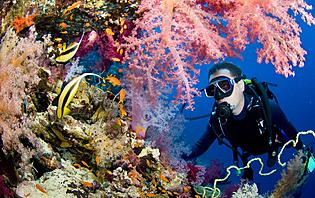 Une plongée haute en couleurs !
