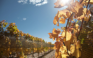 Gorgé de soleil, le vin argentin est fruité et intense