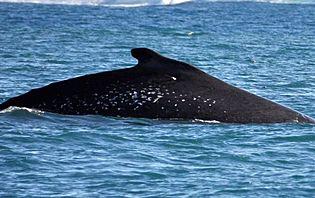 Il est même possible d'apercevoir des baleines dans cet aquarium naturel !