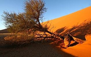 Le désert namibien