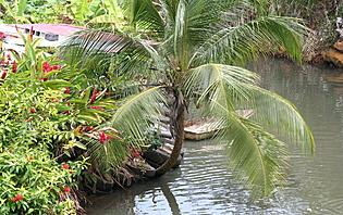 Végétation tropicale en Amérique Centrale