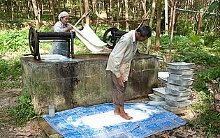 Producteurs de caoutchouc naturel sur Koh Yao Noi