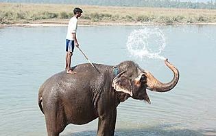Baignade dans la rivière avec un éléphant