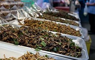 Stand d'insectes sur le marché de Chiang Mai