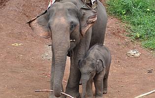 Eléphanteau avec sa maman