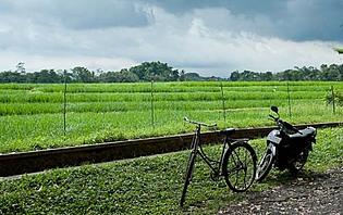 Départ pour l'exploration des rizières de Tabanan