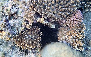 Inutile de descendre très profond pour admirer les coraux