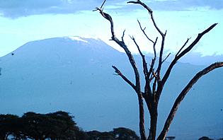 Le Kilimandjaro est composé de 3 volcans