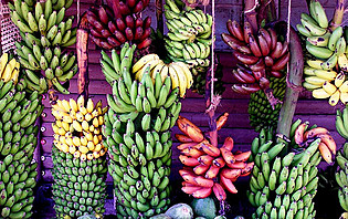 Assortiment de bananes