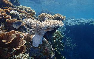 Coraux colorés à faible profondeur