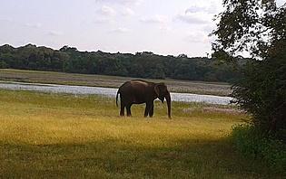 Des safaris en toute tranquilité