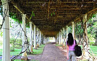 Pas de danger à voyager seule au Sri Lanka