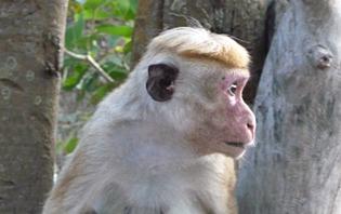 Vous ne pourrez pas manquer les singes durant vos visites des parcs.